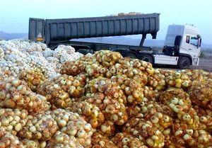 2 علت اصلی گرانی پیاز از دید وزیر کشاورزی