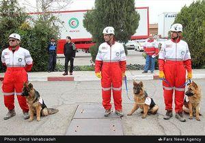 سگهای زنده یاب به دنبال گردشگران مفقود +عکس