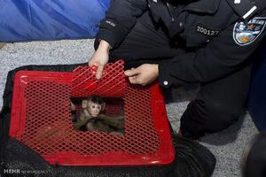 فیلم/ کشف ۲۸۰ حیوان نایاب از قاچاقچیان