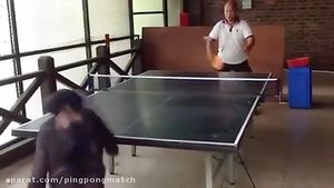 فیلم/ مسابقه تنیس روی میز با میمون