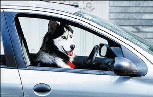 مطالبه عمومی برای مقابله با سگگردانی