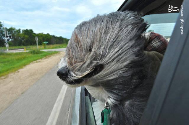 برندگان رقابت عکاسی کمدی حیوانات خانگی