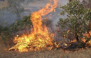 فیلم/ آتش سوزی عظیم در جنگل های گیلانغرب