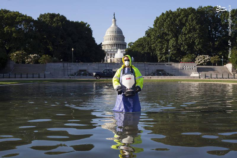 پیشگیری از رشد جلبکها در واشینگتن پس از بارشهای سنگین