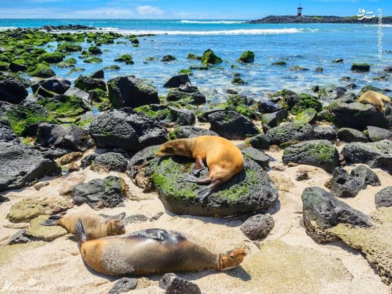جزایر گالاپاگوس | اکوادور/ این جزایر محل زندگی گونه های جانوری خاص و خارق العاده ای هستند. گفته می شود که این جزیره بیشتر به دلیل نظریه ی تکامل داروین مشهور شده است.