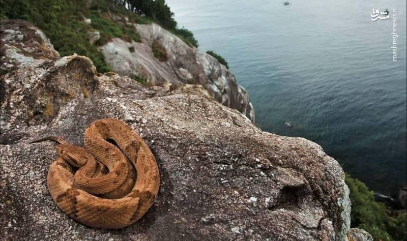 جزیره مارها (Snake Island)، برزیل/ این جزیره محل زندگی یکی از گونههای کشنده مار به نام افعی طلایی است. زهر این مار گوشت تن را آب میکند.بیش از ۴۰۰۰ افعی طلایی در این جزیره زندگی میکند. بهطوریکه در هر ۵ کیلومتر مربع، یک مار دیده میشود. دولت برزیل بازدید از این جزیره را برای عموم ممنوع کرده است جز سالی یکبار آنهم برای دانشمندانی که روی مارها مطالعه میکنند.
