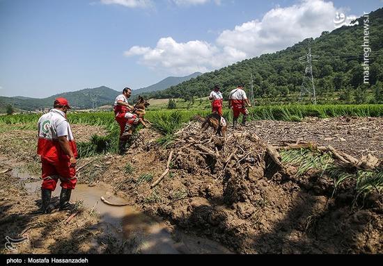 جزئیات تلفات حادثه سیل در ۵ استان کشور