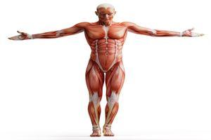 ۱۳ حقیقتی که در مورد بدن خود نمیدانید