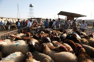 عکس/ بازار خرید وفروش دام در آستانه عید قربان