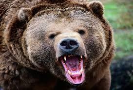 حمله خرس به مرد میانسال