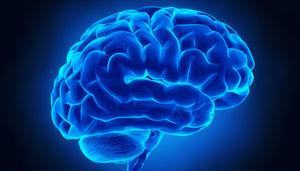 ۶ ترفند طلایی برای سالم نگهداشتن مغز