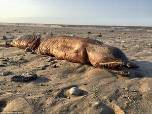 کشف یک موجود ناشناخته در سواحل تگزاس