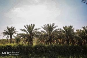 فیلم/ اتفاقی عجیب برای باغبان عربستانی!