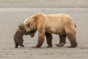 عکس/ برگزیدگان مسابقه عکاسی حیات وحش