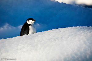 فیلم/ پنگوئن خسته
