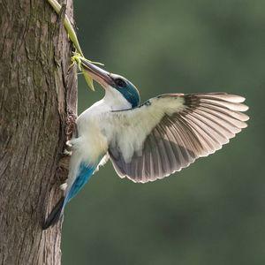 تصاویر دیدنی از دنیای پرندگان