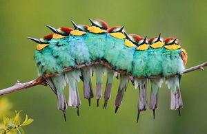عکس/ دورهمی پرندگان در سرما