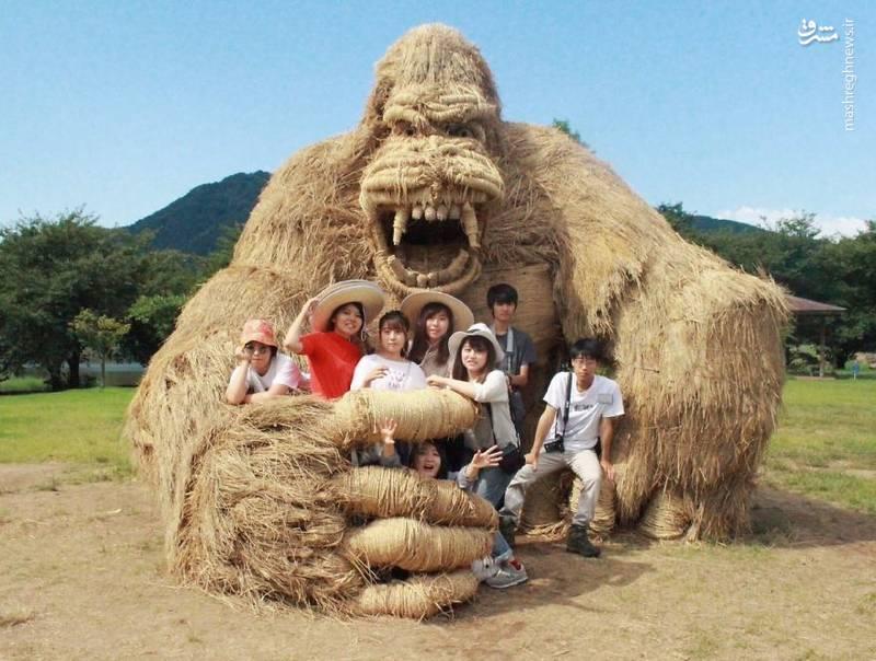 2072092 - حیوانات غول پیکر در مزارع ژاپن