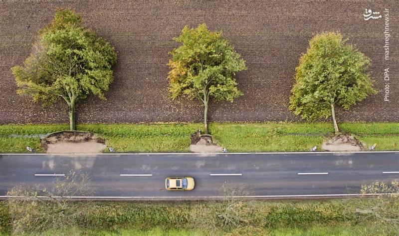 سقوط منظم درختان در اثر طوفانی در آلمان که 7 کشته بر جای گذاشت