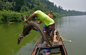 عکس/ شکار و صید آبزیان جنگل آمازون