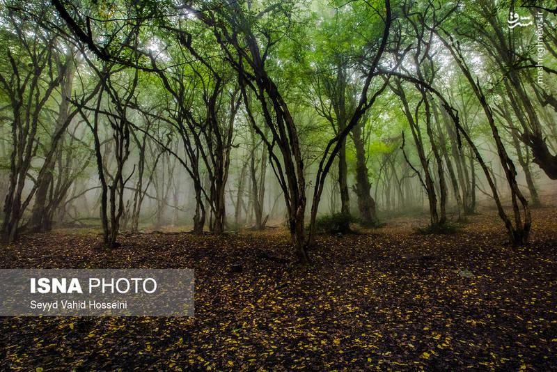 جنگل «الیمستان»