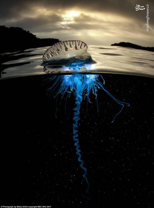 تصاویر خیرهکننده از اعماق اقیانوس