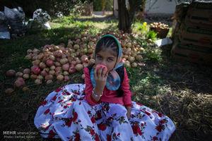 عکس/  جشن انار چینی در روستای انبوه