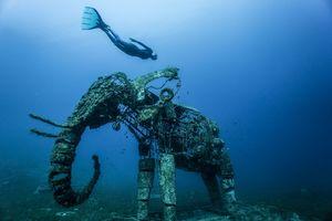 عکس/ غواصی در کنار یک فیل مرجانی