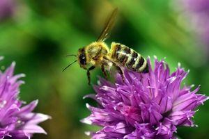 از عاشقانههای بین زنبور و گل چه میدانید؟