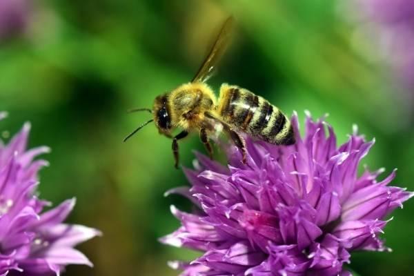 از عاشقانه های بین زنبور و گل چه می دانید؟