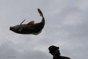 عکس/ سنت سالانه ماهیگیری در جمهوری چک