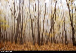 عکس/ طبیعت زیبای جنگل دشت شاد