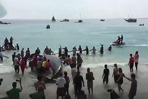 فیلم/ نجات نهنگ به گل نشسته توسط مردم