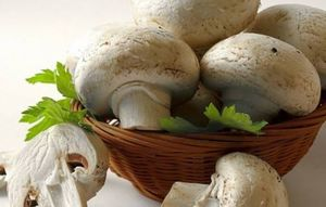 از فواید قارچ برای مقابله با پیری چه میدانید؟