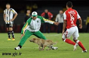 وردو سگ به زمین فوتبال