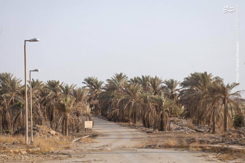نخلستان های اطراف کاخ صدام در حاشیه رود دجله