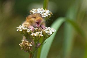 تصویری جالب از یک موش