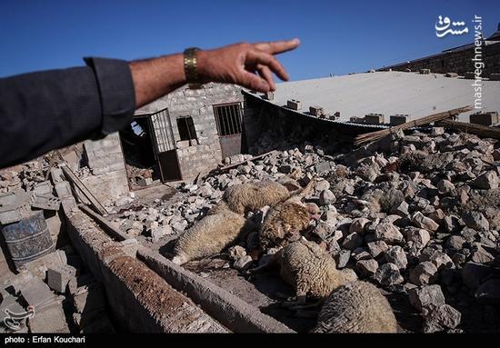 حکایت مهمترین سرویس بهداشتی یک شهر زلزله زده +عکس