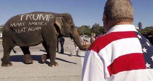 وقتی ترامپ از آب گل آلود زیمباوه فیل می گیرد!!