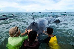 عکس/ جلوگیری از خودکشی در دریا!