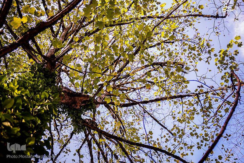مسیر جنگل مرسی سی فاصله تهران تا جنگل راش زیباترین مناطق گردشگری راهنمای سفر جنگل مرسی سی کجاست جنگل راش كجاست جاهای دیدنی شمال ایران جاهای دیدنی ایران پل سفید سوادکوه
