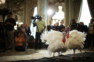 چه تعداد بوقلمون در عید شکرگزاری آمریکا قربانی میشوند؟