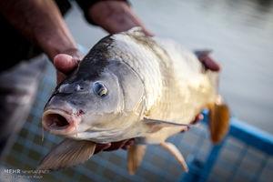 مسابقه ماهیگیری ورزشی در تهران