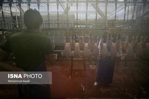 عکس/ در کشتارگاه صنعتی مرغ اراک چه میگذرد؟