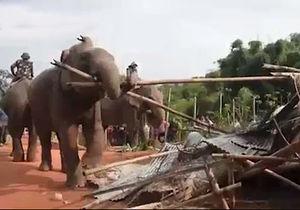 فیلم/ بیرون کردن مهاجران غیر قانونی هند توسط فیلها