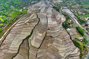 تصویری زیبا از مزارع برنج شهر تالش