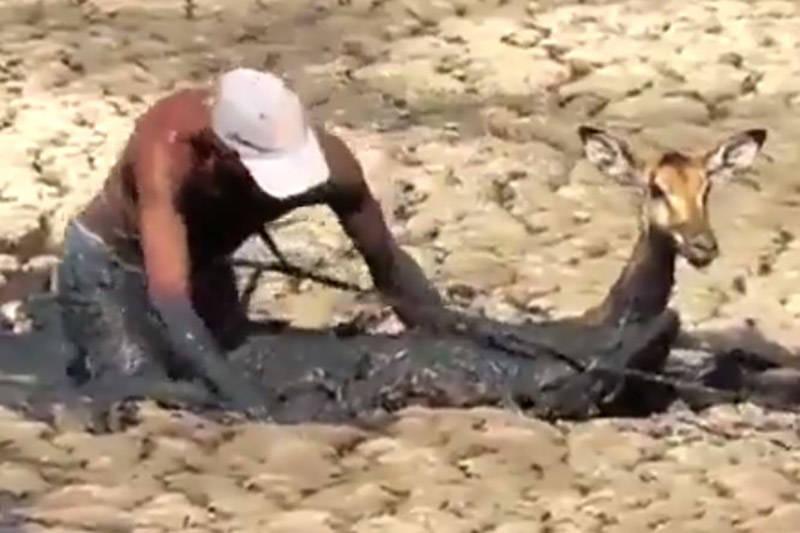 فیلم/ تلاش برای نجات آهوی گرفتار در مرداب