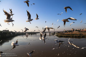 ورود نخستین گروه از پرندگان مهاجر به ساحل کارون در اهواز