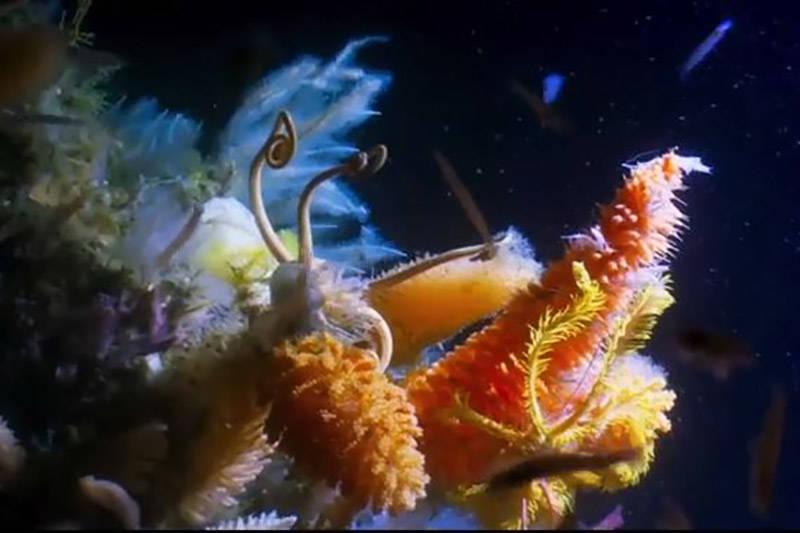 تصاویری حیرت انگیز از دنیای زیر آب