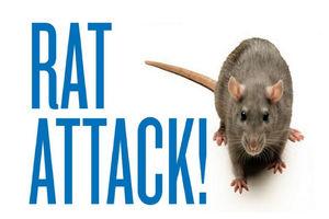 فیلم/ جولان موشهای نیویورکی در مترو